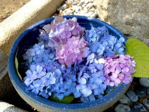 神吉神社の紫陽花